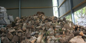 Our big pile of logs for sale!