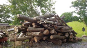 Logs waiting to be chopped up!